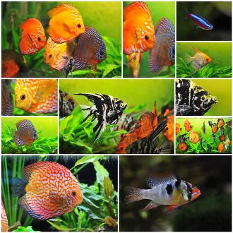 What Kinds Of Fish Are Suitable For Different Types Of Aquariums